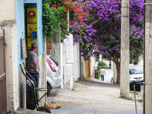 Además de poder comprar flores a todas horas, en São Paulo también es posible ver flores durante todo el año. Y es que a pesar de la verticalización, en la selva de piedra la naturaleza no ha perdido completamente su reinado. No importa qué época del año sea para que las calles se vistan de colores, sobre todo después de unos días de lluvia y sol.