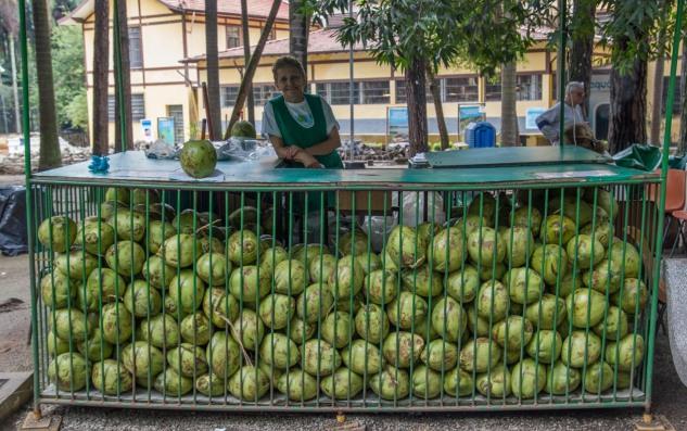 """AGUA DE COCO En el puesto de esta señora, en el parque de Agua Branca en São Paulo, podemos pedir un agua de coco. Ella cogerá un fruto y, manejando con fuerza y habilidad un gran cuchillo, abrirá un agujero en uno de sus extremos. Después introducirá una pajita y nos lo entregará con una bonita sonrisa. Así podremos disfrutar de una refrescante y nutritiva agua de coco, bebida muy popular en Brasil. Los cocos son el fruto de los cocoteros, un tipo de palmera común en regiones tropicales. Si se recolectan antes de su maduración, cuando su piel todavía es verde, su interior está lleno de un líquido transparente conocido como """"agua de coco"""", que además de refrescar y calmar la sed, aporta vitaminas, sales minerales, y una larga lista de sustancias beneficiosas para el organismo. Dicen en Brasil que un ser humano podría resistir varios días a base de esta bebida."""